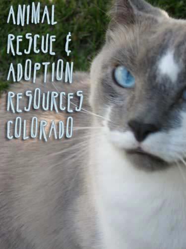 cat repellent ultrasonic reviews